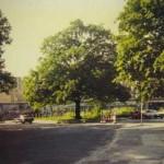 クロイツベルク時空散歩(5) - 国境の三角農園(上) -