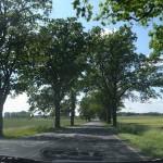 発掘の散歩術(60) - 番外編:ブランデンブルク州 『リベックじいさんのなしの木』の村を訪ねて -
