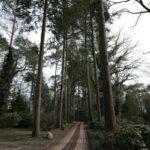 ヘーア通りの森の墓地を歩く