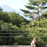 三ツ峠山から臨む富士
